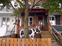 Cow at Linda's