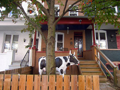 Cow at Linda's